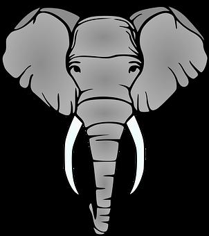 Elephant, Head, Tusks, Mammal, Animal, Safari, Nature