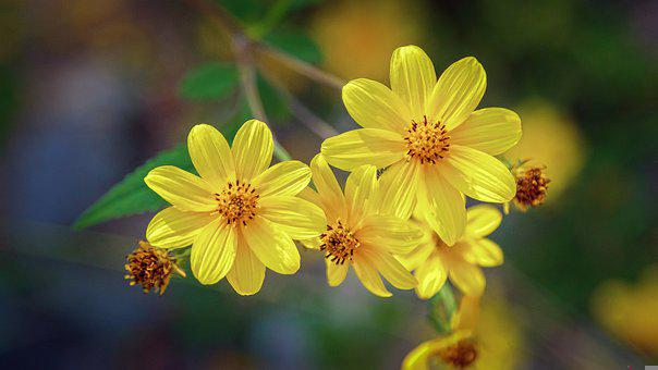 Flowers, Yellow Flowers, Blossom, Bloom, Nature, Flora
