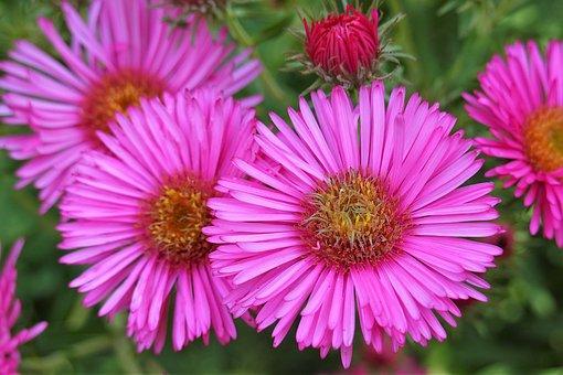 Flowers, Petals, Leaves, Foliage, Buds, Flora, Floral