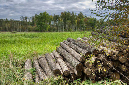 Firewood, Logs, Trees, Leaves, Foliage, Grass, Pasture