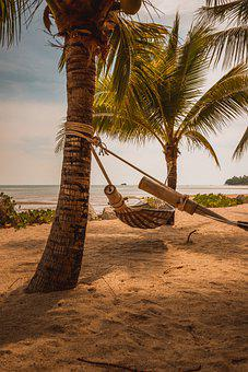 Palm Trees, Beach, Hammock, Coconut Trees, Sand, Rest