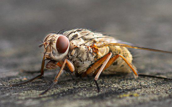 Insect, Macro, Entomology, Close Up, Compound Eyes