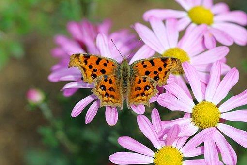 Butterfly, Flowers, Meadow, Large Tortoiseshell