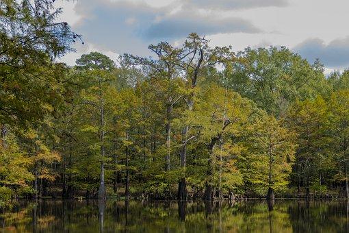 Forest, Swamp, Trees, Wetlands, Marsh, Woodlands, Woods