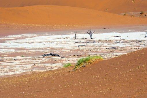 Desert, Sand, Dunes, Plants, Vegetation, Nature