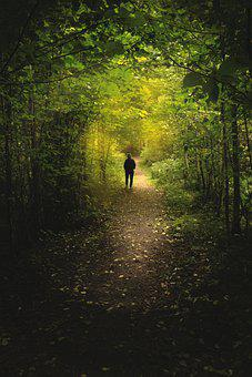 Forest, Silhouette, Woods, Trees, Path, Person, Walking