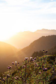 Flowers, Sunrise, Sun, Clouds, Mountain, Alpine