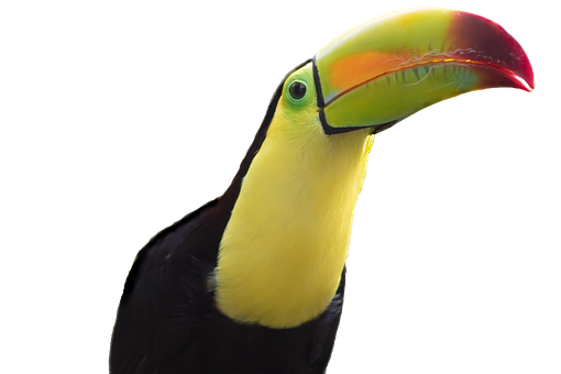 Toucan, Bird, Beak, Tropical, Wildlife, Feathers, Bill