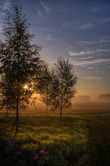Trees, Leaves, Foliage, Grass, Pasture, Fog, Sunrise