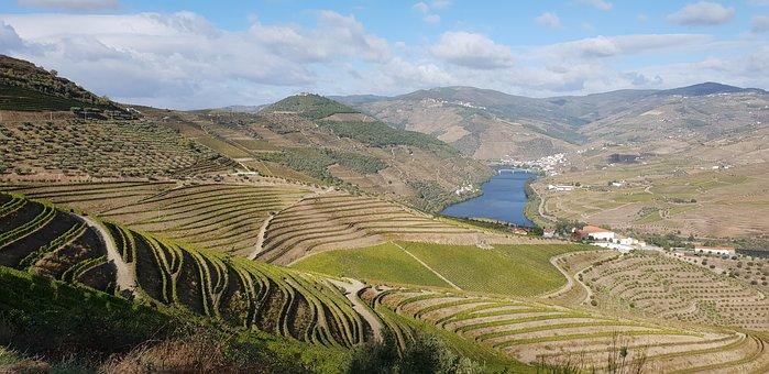 Vineyard, Valley, Agriculture, Farm, Farming