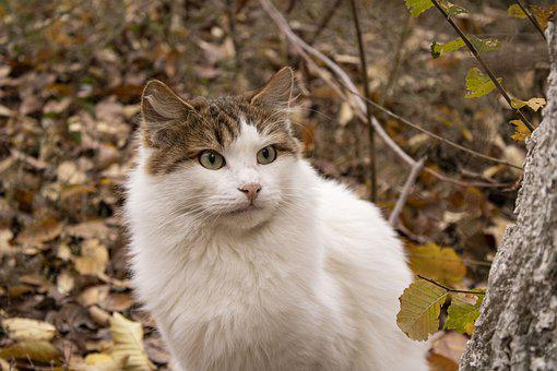 Cat, Pet, Animal, Domestic Cat, Feline, Mammal, Cute