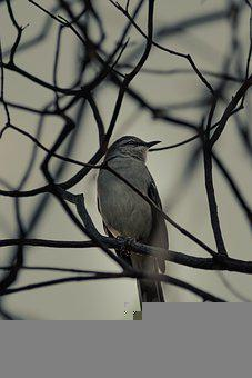 Bird, Branches, Tree, Feathers, Plumage, Ave, Avian