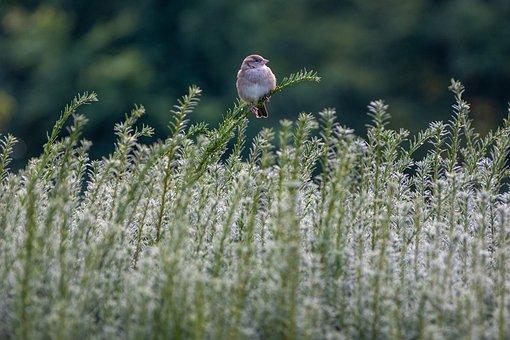 Bird, Sparrow, Beak, Branch, Feathers, Plumage, Sit
