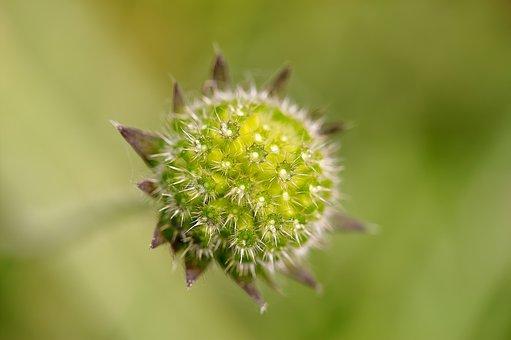 Flower, Dry, Plant, Autumn, Blossom, Bloom, Wild Flower