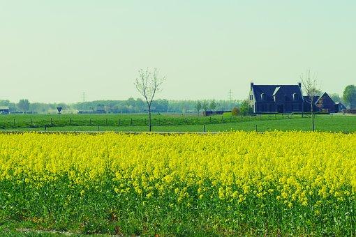 Flowers, Fields, House, Farm, Farm House