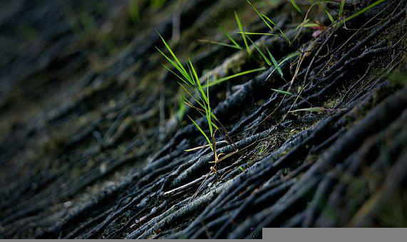 Grass, Plants, Roots, Foliage, Leaves, Herbs, Nature