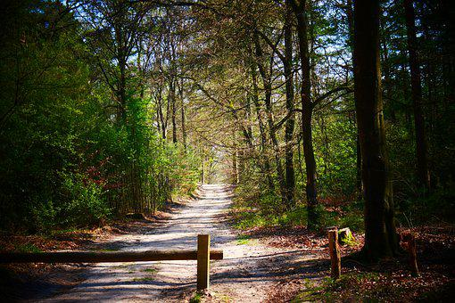 Path, Trees, Forest, Trail, Forest Path