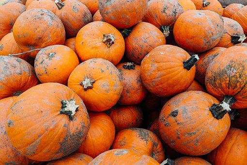Pumpkins, Pumpkin Patch, Orange, Vegetables, Fresh