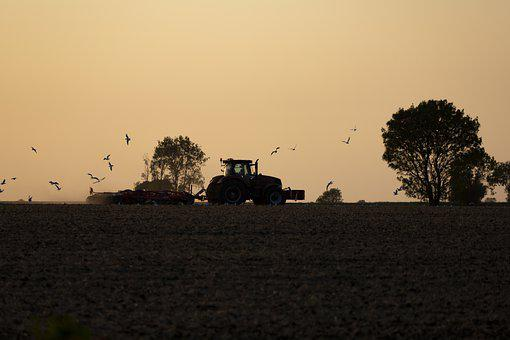 Tractor, Farm, Sunset, Farming, Harvest, Plantation