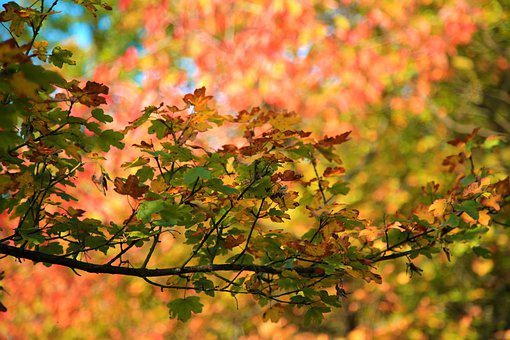 Leaves, Trees, Foliage, Branches, Twigs, Autumn Leaves