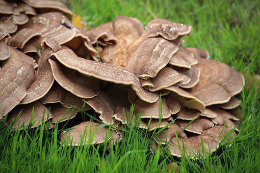 Mushrooms, Wild Mushrooms, Spore, Sponge, Fungi