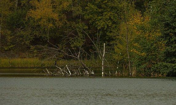 Lake, Trees, Vegetation, Grass, Plants, Bank, Autumn