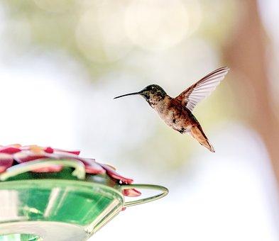 Birdfeeder, Hummingbird, Bird, Flight, Wings, Plumage