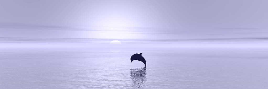 Sunset, Dolphin, Ocean, Silhouette, Reflection, Jumping
