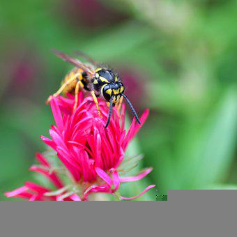 Wasp, Insect, Flower, Forage, Pollination, Pollinate