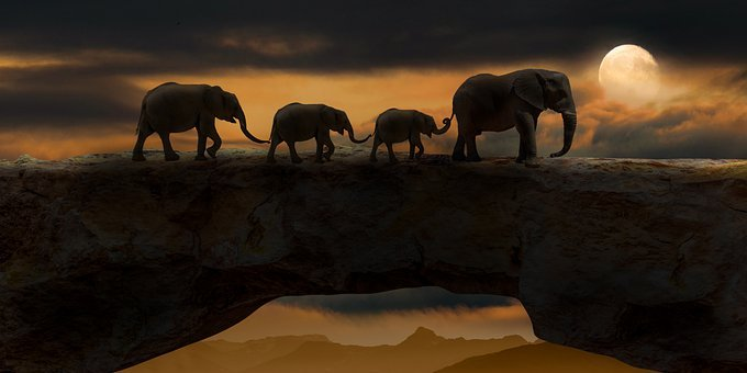 Elephants, Animals, Bridge, Mammals, Wildlife