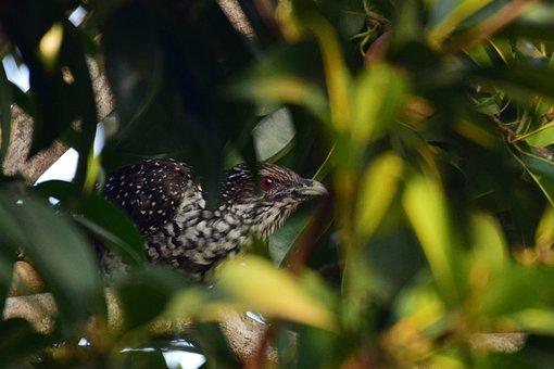Bird, Hiding, Peek, Peeping, Wildlife, Curious