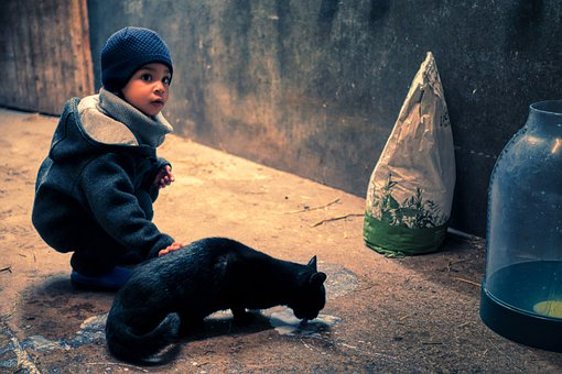 Cat, Boy, Child, Cute, Happy, Pet, Milk