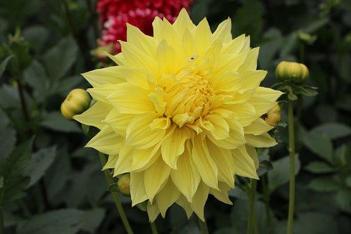 Flower, Yellow, Spring, Portrait, Flora