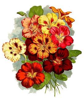 Flowers, Petals, Blossom, Bloom, Bunch