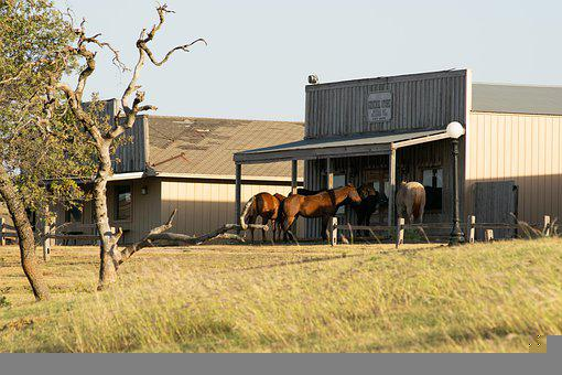 Horses, Ranch, Farm, Animals, Mammals, Equine, Outdoors