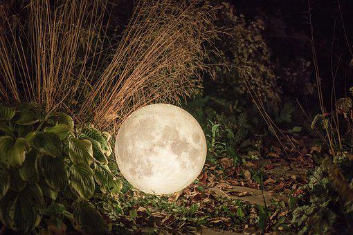 Moon, Leaves, Plants, Moonlight, Craters, Full Moon