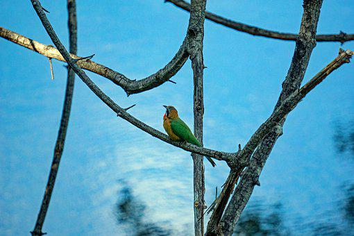 Bird, Branches, Perched, Perched Bird