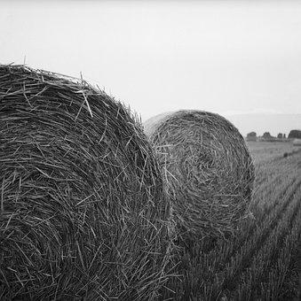 Hay, Rolls, Bale, Agriculture, Harvest, Summer, Nature