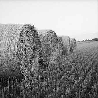 Hay, Rolls, Bale, Agriculture, Harvest, Summer, Nature