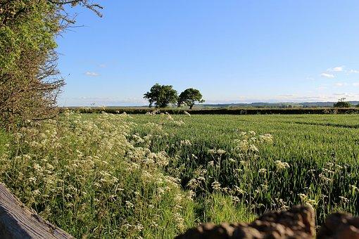 English Countryside, Yorkshire Moors, English