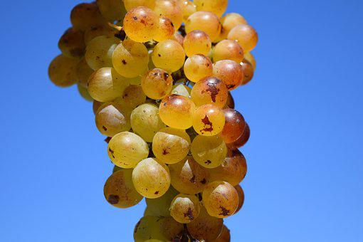 Grapes, Ripe, Ripe Grapes, Fruit, Table Grapes, Healthy
