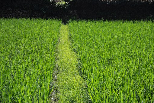 China, Culture, Xia Tian, Farmland, Grass, Green, Field