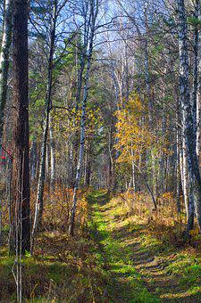 Road, Autumn, Landscape, Siberia, Forest, Nature, Trees