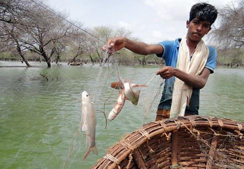 Fish, Netted, Coracle, Fishing, Wetland, Bird Sanctuary
