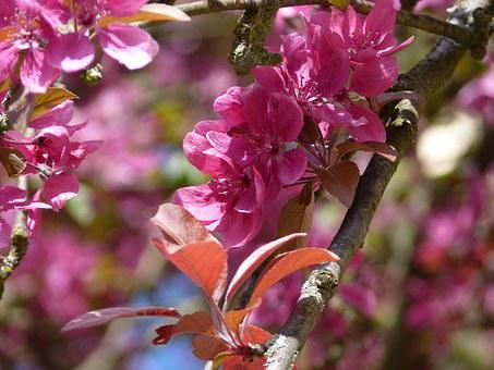 Blossom, Bloom, Spring, Pink, Flowers, Nature, Plant