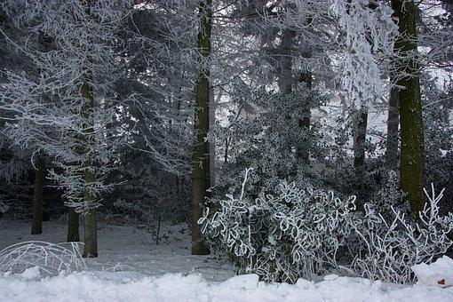 Winter, Ripe, Eiskristalle, Ice, Snow, Holly