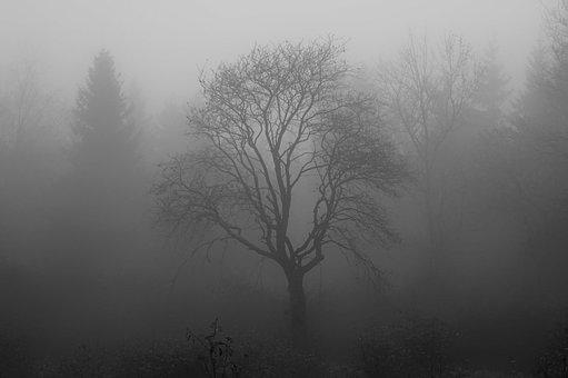 Tree, Fog, Moor, Swamp, Venn, Branch, Structure, Forest