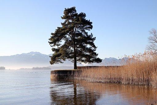 Tree, Bank, Seawall, Kai, Water, Lake, Reed, Mood