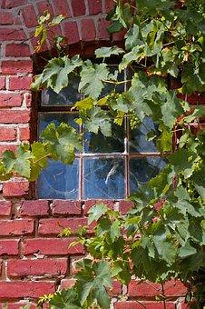 Vine, Vine Leaves, Wine, Leaves, Plant, Nature, Wall