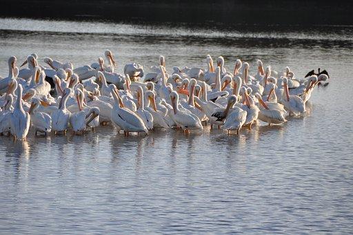 Sanibel, Birds, Beach, Nature, Florida, Wildlife, Water